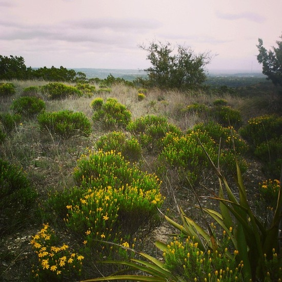 The view on Brushy Top on the second day of spring, 2013. The yellow flowers are Damianita and their leaves are strongly spicy smelling. #spring #yellow #flowers #texas #nature #hills #landscape #outdoors #scenic