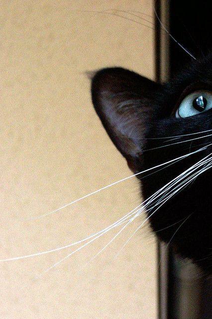 ???? Beautiful Black Cats ?????