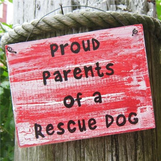 Rescue dogs rule!