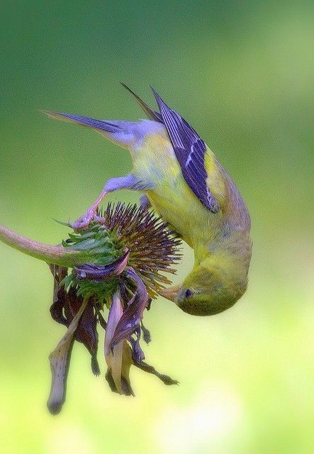 Colors!...Bird and flower are in hue harmony...