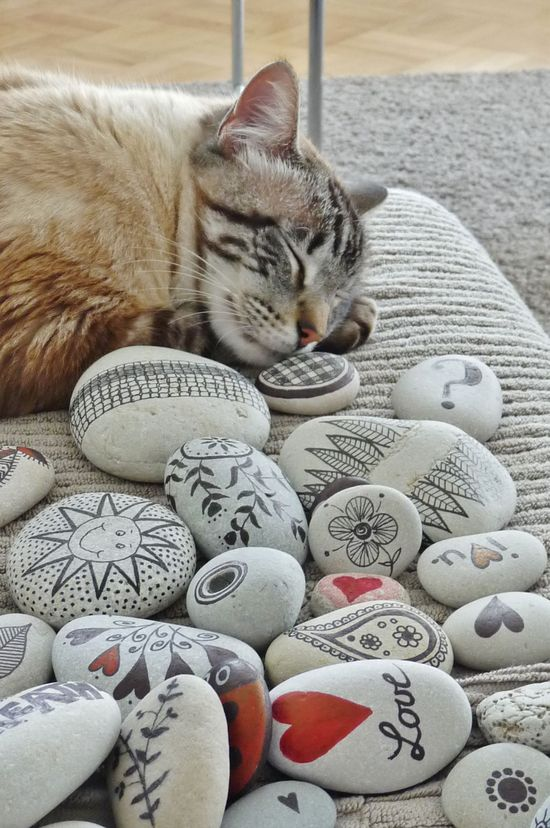pebbles and cat ...