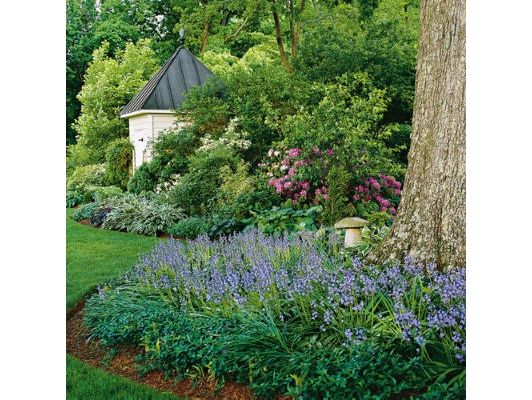 Spanish Bluebell - Home and Garden Design Ideas