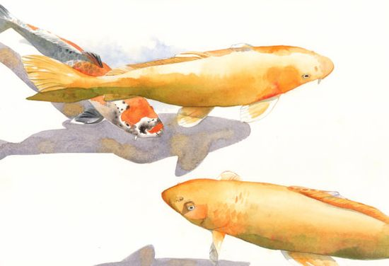 Koi Painting  print of watercolor painting FISH A4 by Splodgepodge, $20.00
