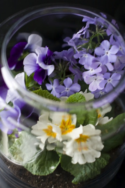 Stunning flowering terrarium via the always fabulous Mr. @Matthew Mead !!
