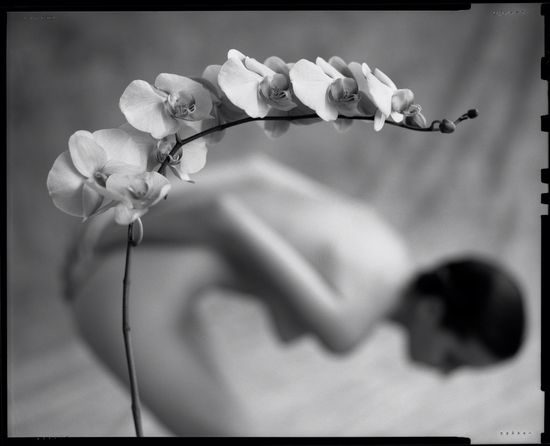 50+ Best MARK Arbeit 1953 images | photography, helmut newton, out ...