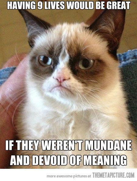 Grumpy cat's 9 lives…