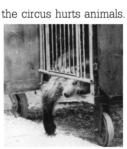 circus prison - Umm, let's think about this...do animals have feelings? Does this, or any, bear want to be caged? Should we go to a circus and support the confinement of animals?