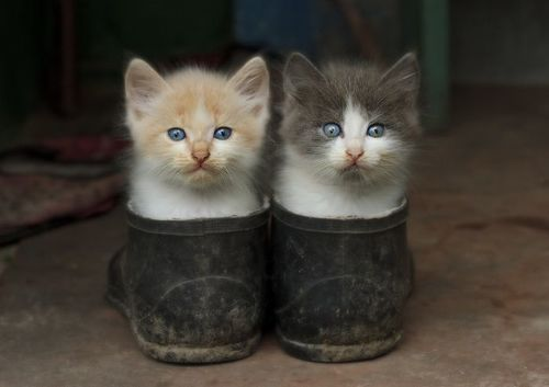 #funny #cats #cute animals #kitten