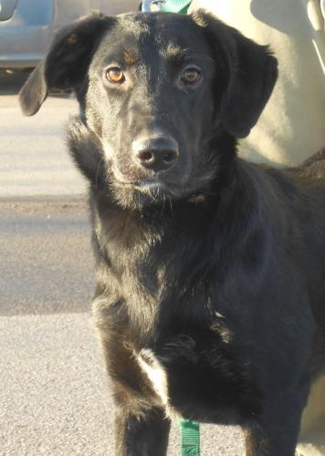 Lonestar is an adoptable German Shepherd Dog Dog in Appleton, WI Hi! I'm Lonestar. My siblings and I were born October 1st, 2011 in Tennessee. We came to Ch ... ...Read more about me on @Petfinder.com.com.com.com