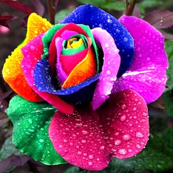 Colorful rose..would make a nice tattoo