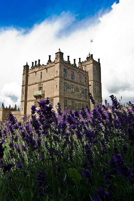 Lavendar castle by Rob Knight. The 12th century Bolsover Castle in Derbyshire, UK
