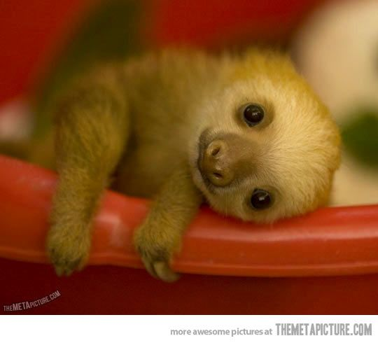 Oh hi, I'm a baby sloth…