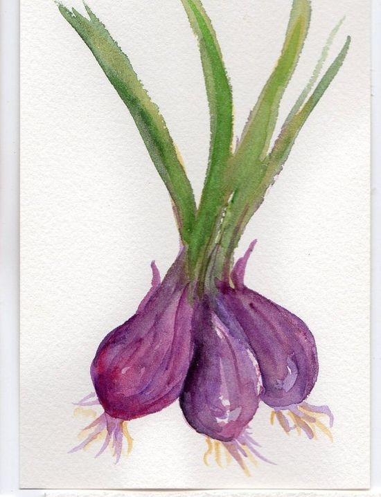 Purple onions from the Farmers Market and they were tasty #watercolor #painting#art