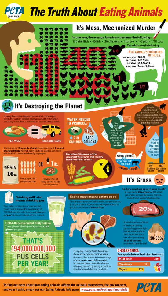The Truth About Eating Animals #infographic #facts #animals #factoryfarming #govegan #veganism #slaughterhouse #truth #vegetarian #vegan #helpinganimals #neverbesilent #eatinganimals #environment #health #speakup #takeaction