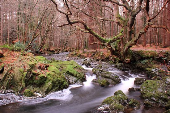 The Shimna River, County Down, Northern Ireland The source of the Shimna River is in the Mourne Mountains on the slopes of Ott Mountain. The river then flows in a northerly direction into Fofanny Dam. The river continues its flow into Tollymore Forest Park where it joins other streams such as the Spinkwee. #NorthernIreland #Ireland #Shimnariver