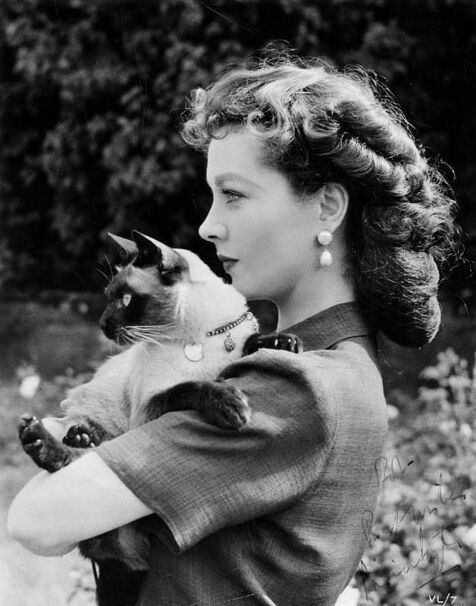 Vivien Lee and her Siamese, New Boy