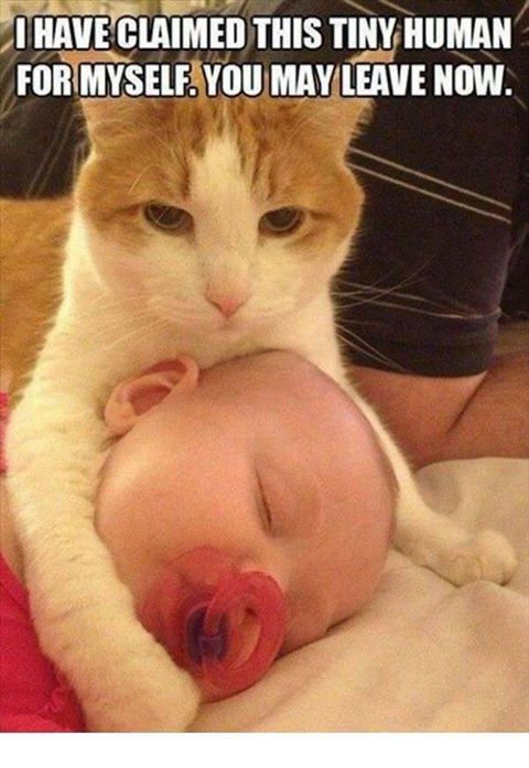 aww he loves his lil human :)