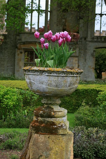 urn with tulips.....lovely