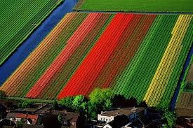 tulips tulips tulips---I am obsessed with outdoor tulips and HAVE to see tulip fields someday.