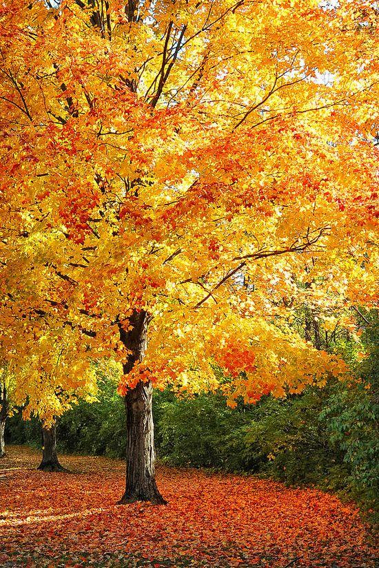 ? Fall