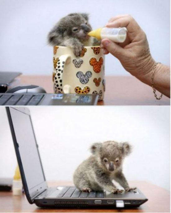Ermahgerd So Many Cute Things Cute babies animals  cute beautiful