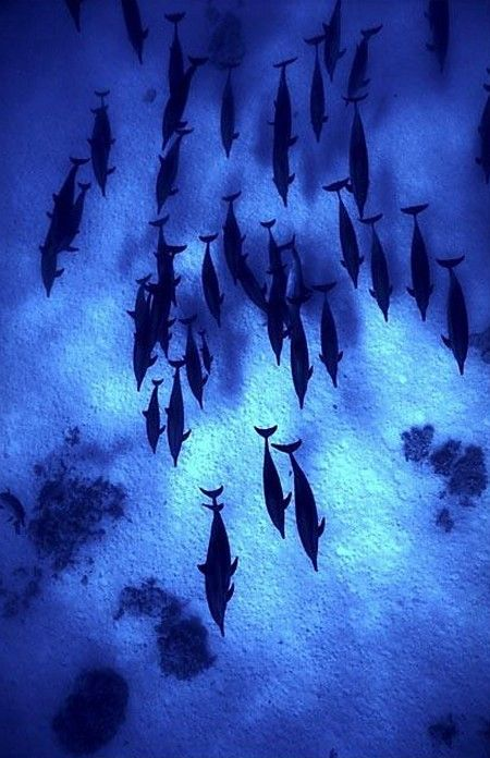 Brilliant Blue....School of Dolphins !!