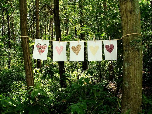 Bunting in forest.