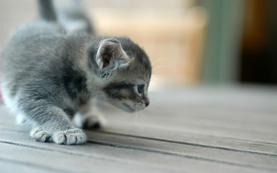 Cute baby cat photo