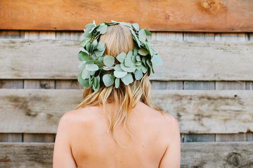 eucalyptus crown