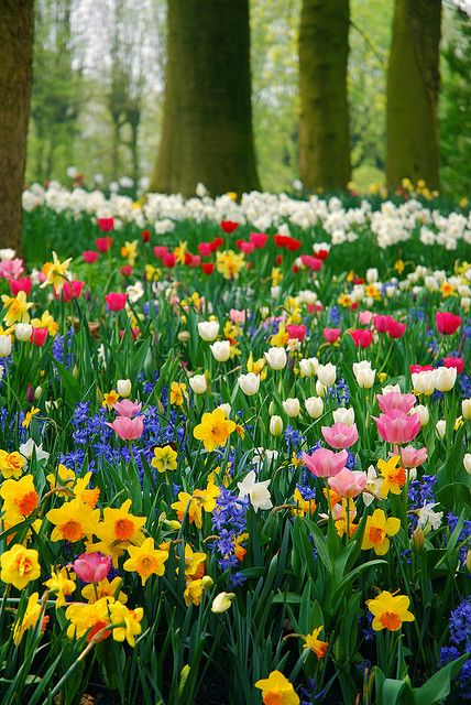 Color! Spring!