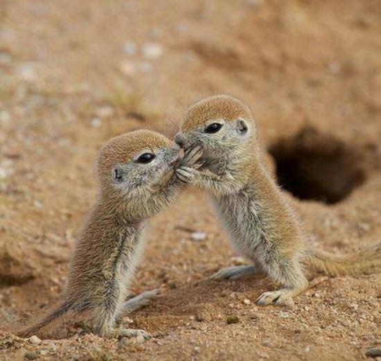 Awww Baby Animals