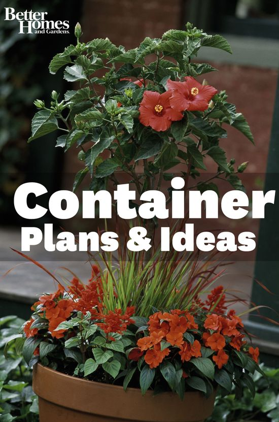 Create beautiful container gardens with these helpful and inspiring recipes. Learn how here: www.bhg.com/...
