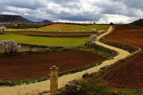 Photo of the week 20.11.2012 (El Camino, Guadalajara)