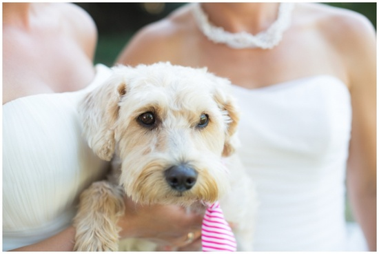 #Pet at wedding ... Wedding ideas for brides, grooms, parents & planners ... itunes.apple.com/... … plus how to organise an entire wedding, without overspending ? The Gold Wedding Planner iPhone App ?