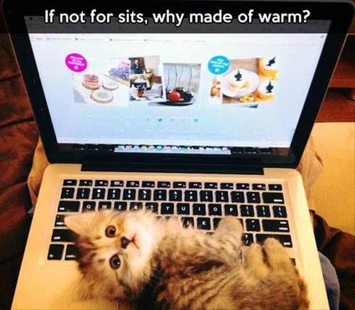 cute cat~ #cat