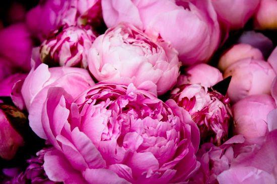 pink pink pink peonies