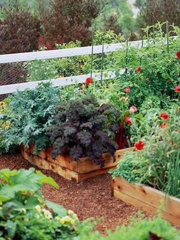 Great Looking Vegetable garden