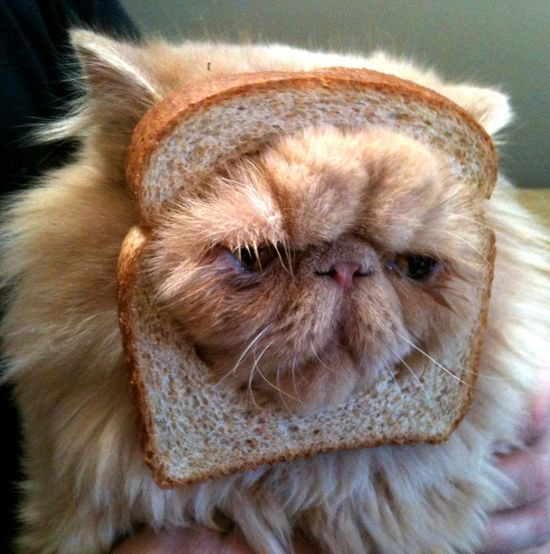 Poor cat… he got breaded… Sad looking, yet funny all at the same time.