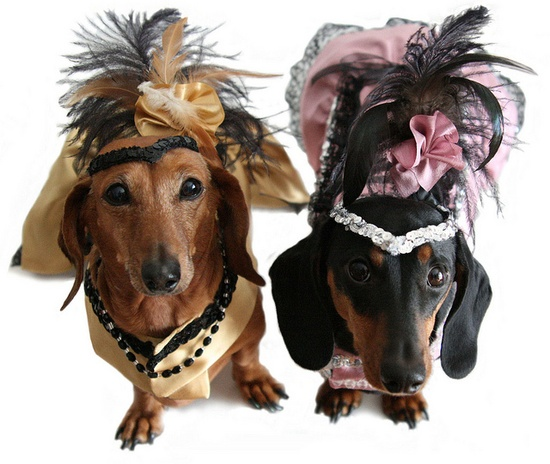 Doxies in Costume