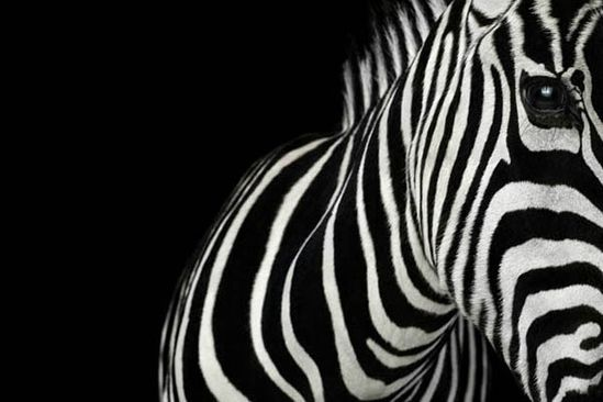 wild animals - Brad Wilson