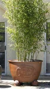 Planter with bamboo for privacy… cute idea for the side of the patio