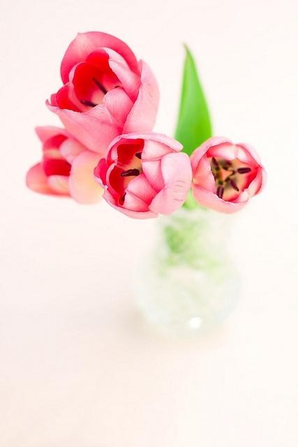 A fabulous pop of springtime blush pink. #pink #flowers #arrangement
