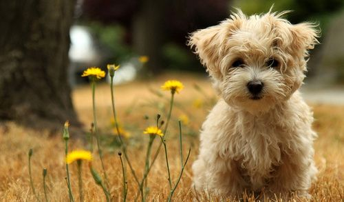 I want this puppy ?