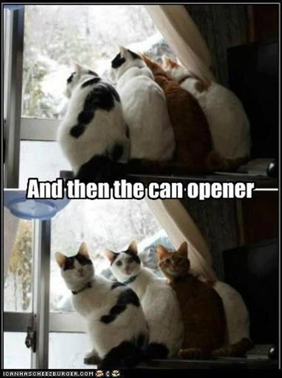 Lol! This is our cats for sure! Haha