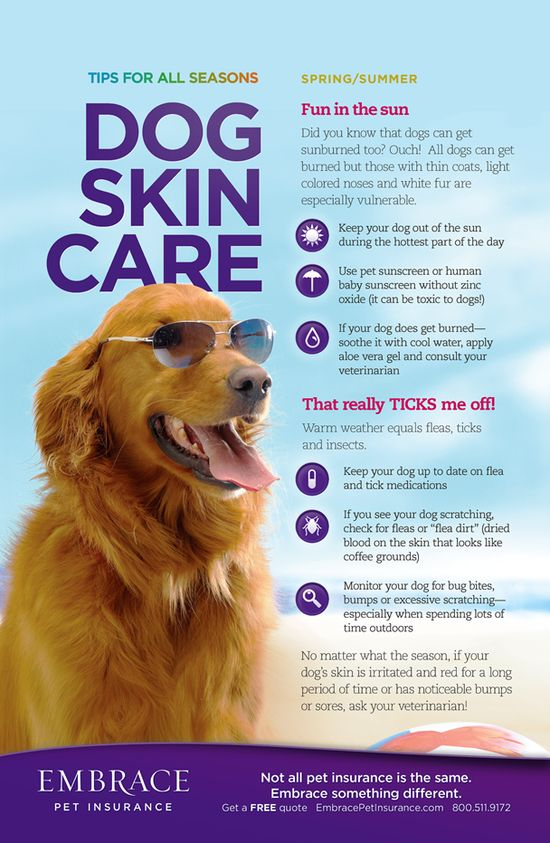 Your pet's skin is just as sensitive as yours. These tips will help keep your pet's skin safe all summer. For more pet tips, click here- www.embracepetins...