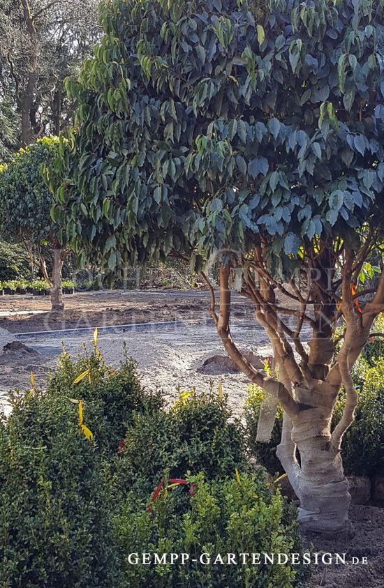 Stunning Gartenplanung Gartengestaltung und Gartenbau