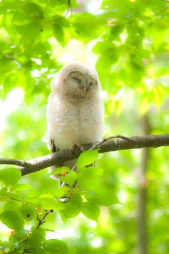 Well, owls are nocturnal animals; they are suppose to sleep during the day!