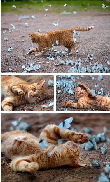 Basking in butterflies-- bliss...