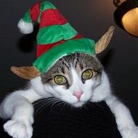 Check out some of our favorite holiday pet photos.