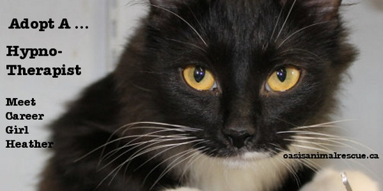 Very healthy idea - an in-house hypnotherapist! Adopt cat Heather. oasisanimalrescue.ca